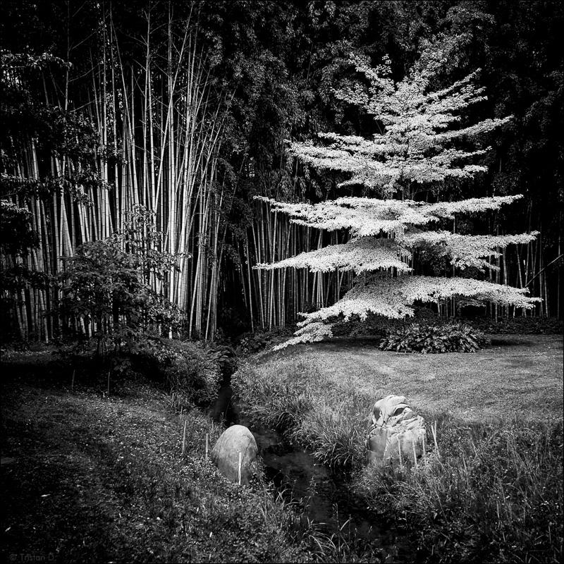 Bambous / 2