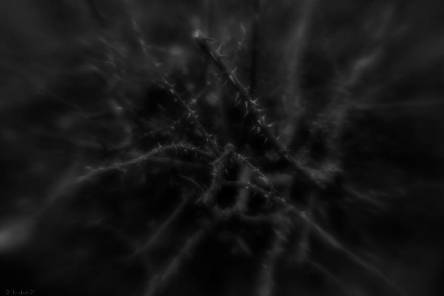 Douceur noire / 2