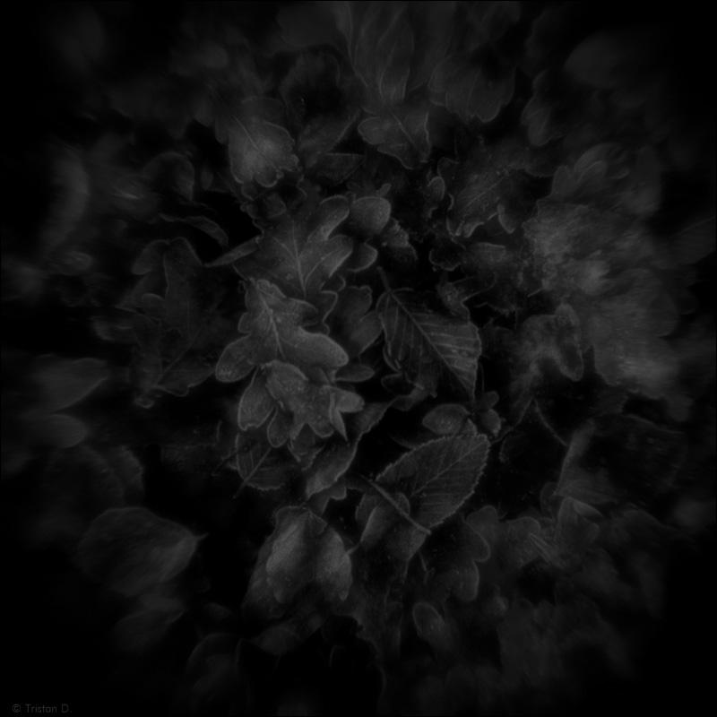 Les feuilles givrées